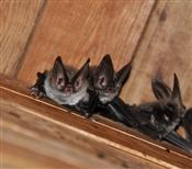 Bat Supplies
