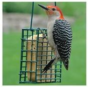 Audubon Single Suet Cage Bird Feeder